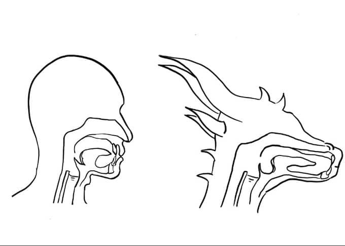 L'apparato fonatorio di un Umano/Umanoide e di un Dragonborn a confronto in The Journal of Fantastic Linguistics
